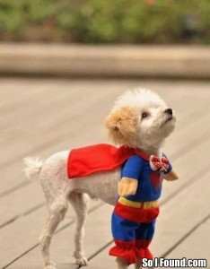 silly-superman-dog-costume